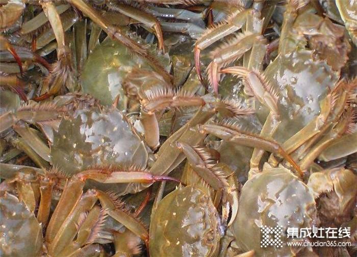 杰森喊你来吃肉质肥美的大螃蟹啦
