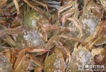 杰森喊你来吃肉质肥美的大螃蟹啦 (947播放)